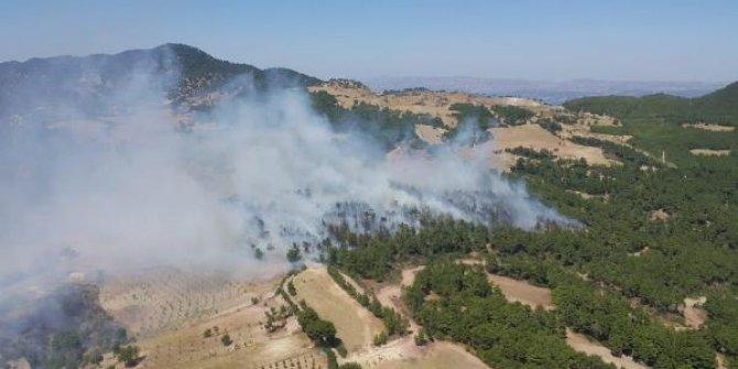 Denizli'de kızılçam ormanlarında yangın