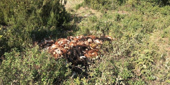 Toprağa gömülü 6 bin ölü tavuk bulundu