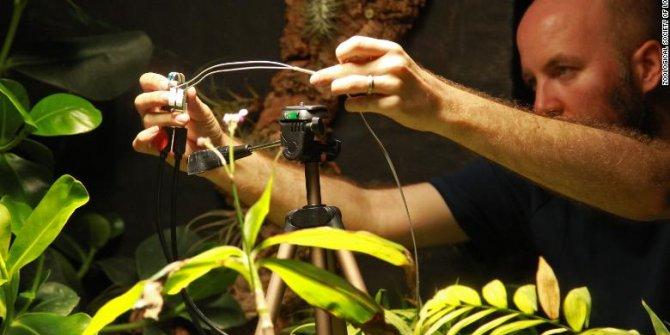 Dünyada ilk defa bir bitki tarafından selfie çekildi