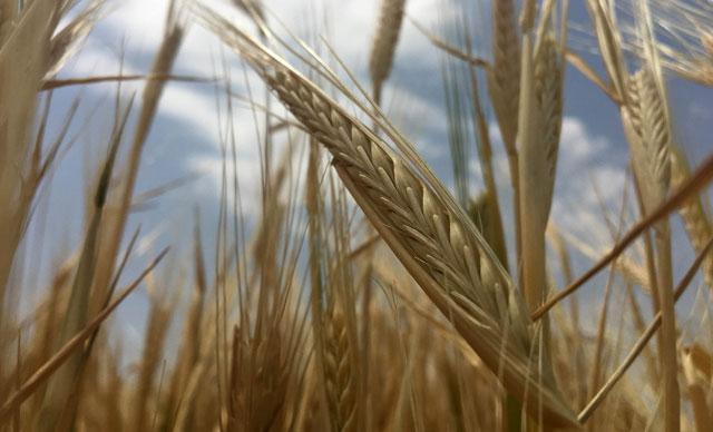 Konya Ovası'nda, ekim sezonu kuraklık alarmı