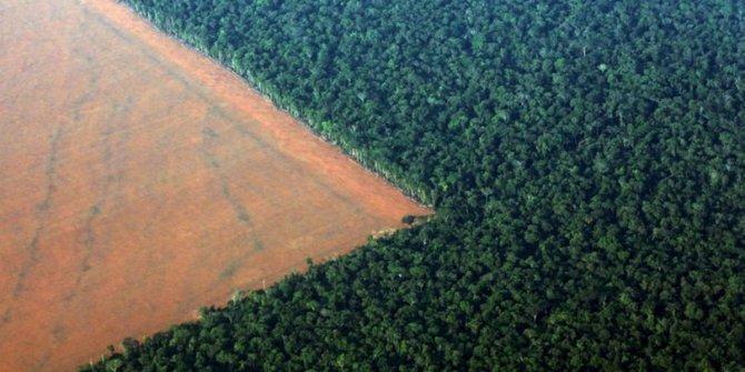 Amazon ormanlarında büyük tehlike