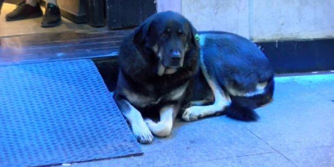 Taksim'de aynı köpek yine ısırdı