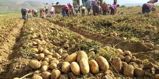 Erdoğan terörist ilan etmişti: Patates üreticisi zor durumda!