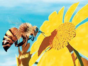 Bal arılarını kendi elimizle öldürüyoruz