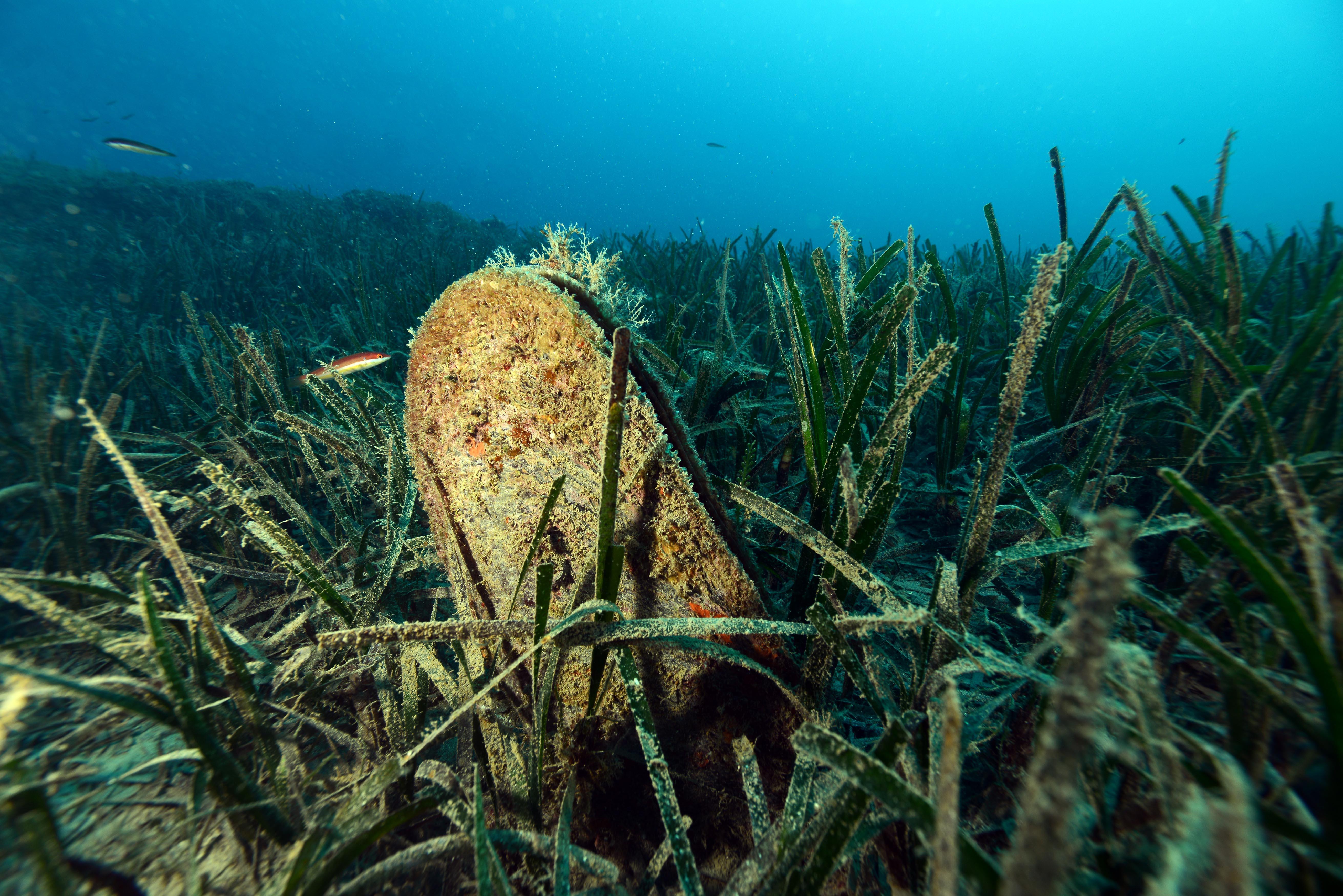 denizlerin-temizleyicisi-pinalari-olduren-virus-kiyilarimiza-geldi-4017-dhaphoto4.jpg