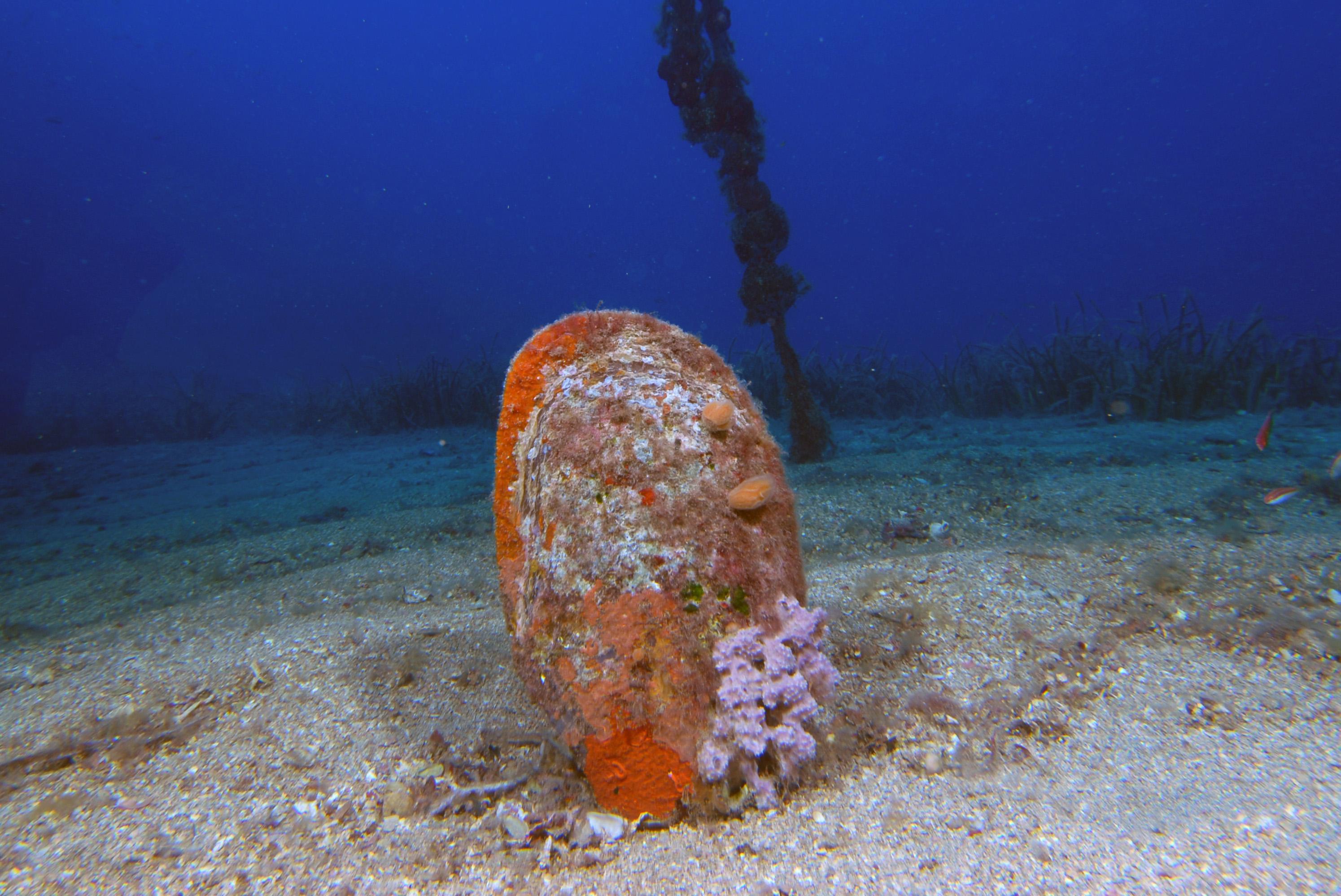 denizlerin-temizleyicisi-pinalari-olduren-virus-kiyilarimiza-geldi-4017-dhaphoto5.jpg