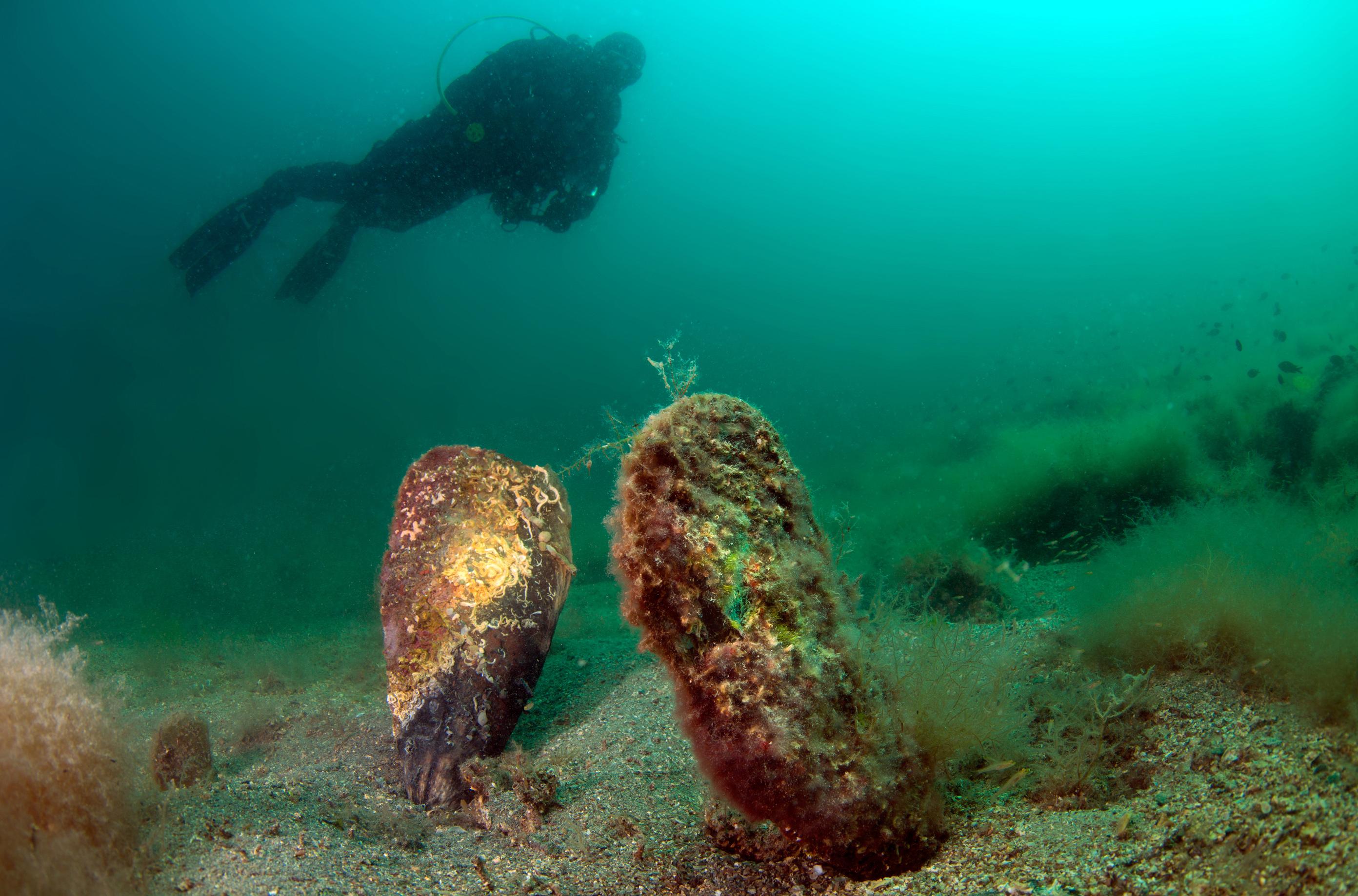 denizlerin-temizleyicisi-pinalari-olduren-virus-kiyilarimiza-geldi-6462-dhaphoto1.jpg
