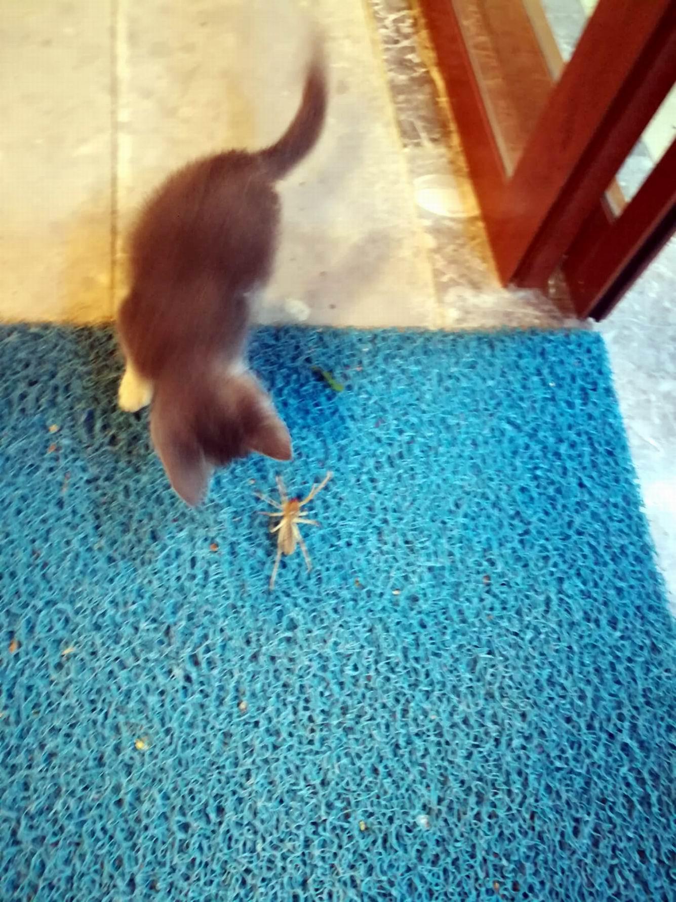 dev-orumcek-ile-yavru-kedinin-mucadelesi-kamerada-1332-dhaphoto1.jpg
