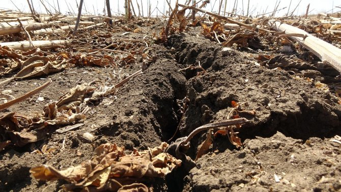 edirnede-kuraklik-topraklari-catlatti-ciftci-ekim-yapamiyor-3946-dhaphoto6.jpg