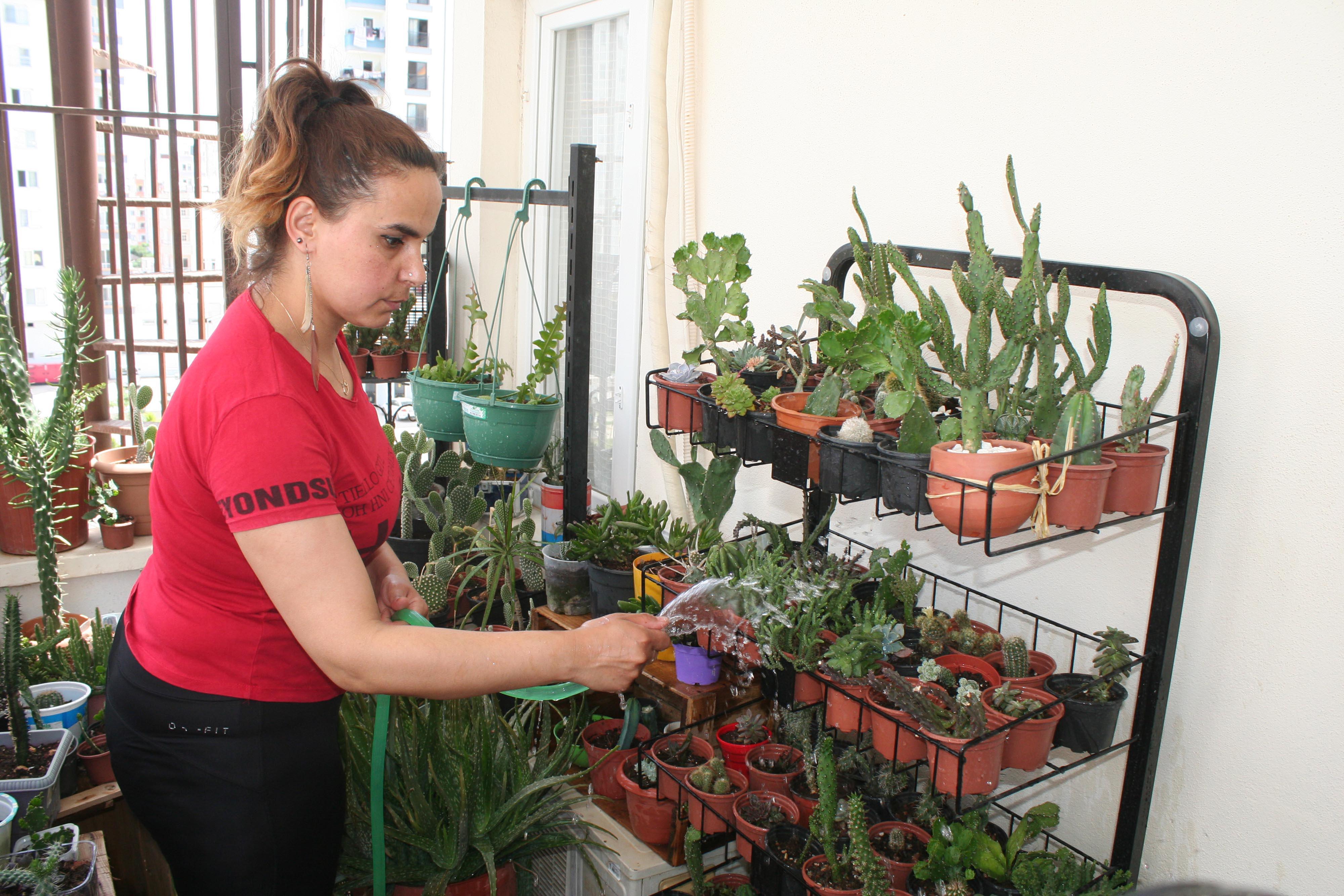evinin-balkonunu-kaktus-bahcesine-cevirdi-3056-dhaphoto5.jpg