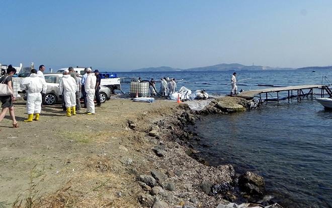 focada-denize-yakit-akitan-gemi-sokum-icin-karaya-cikarilmis_1313_dhaphoto8.jpg