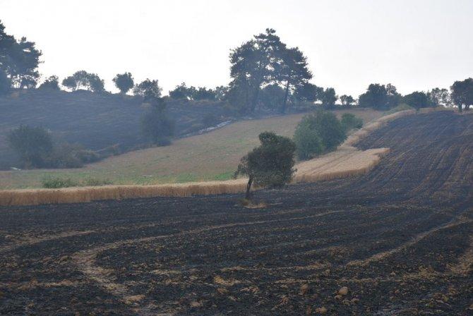 gelibolu-yanan-bugday-tarlalari2.jpg