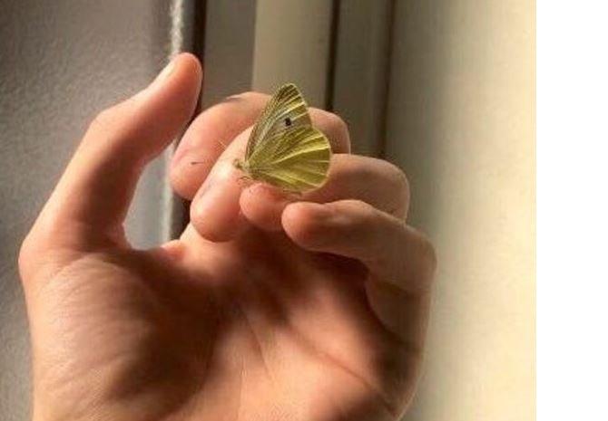 kelebek-oldu-tirtillar.jpg