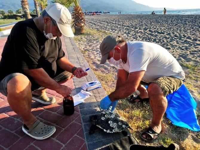 kusadasinda-en-buyuk-erkek-yesil-deniz-kaplumbagasi-kiyiya-vurdu-4980-dhaphoto1.jpg