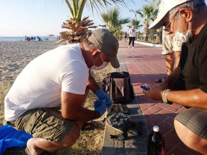 kusadasinda-en-buyuk-erkek-yesil-deniz-kaplumbagasi-kiyiya-vurdu-4980-dhaphoto2.jpg