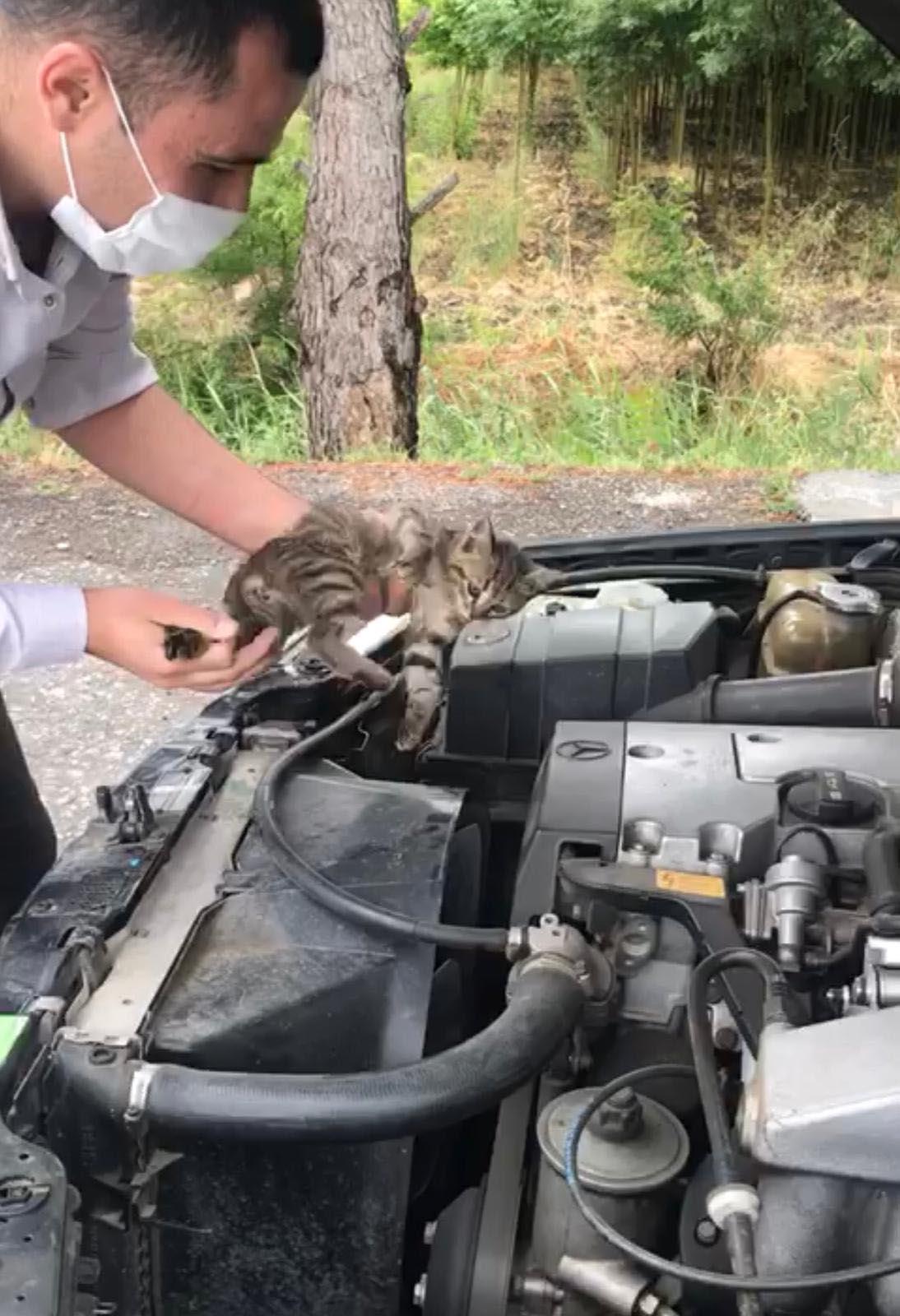 motor-kaputundaki-yavru-kedi-70-km-yolculuktan-sonra-fark-edildi-9080-dhaphoto3.jpg