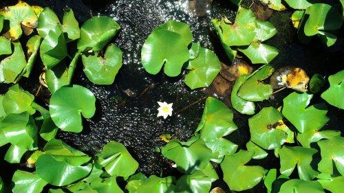 nilufer-golunde-acan-beyaz-renkli-cicekleri-koparmanin-cezasi-73-bin-tl-4474-dhaphoto4.jpg