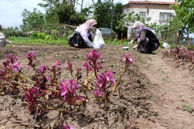 yabani-orkide3.jpg